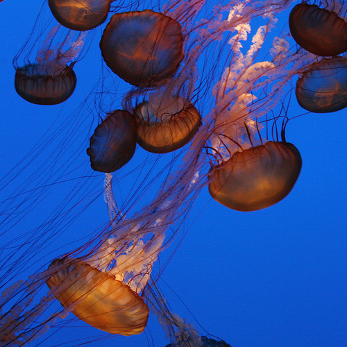 The Hypnotic Jellyfish Aquarium picture