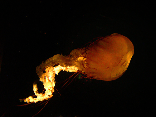 Jellyfish Protection picture