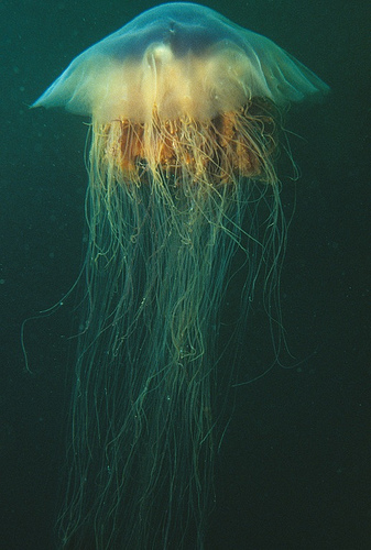 Jellyfish News picture
