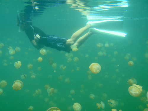 Jellyfish Are Coming picture
